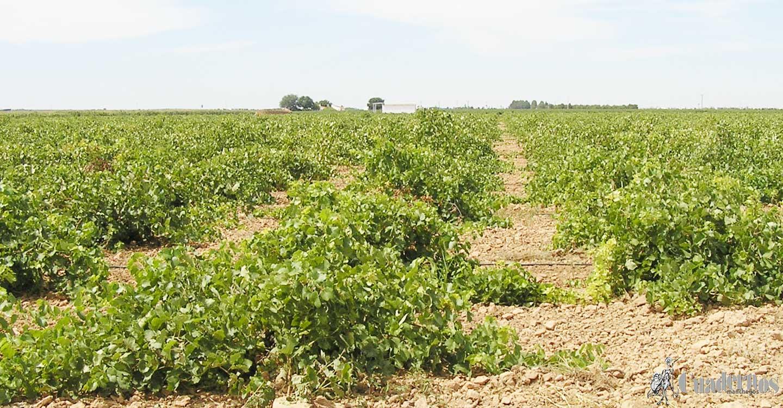 ASAJA CLM interpone un recurso de alzada contra la resolución que prohibió cosechar los días 11 y 12 de julio