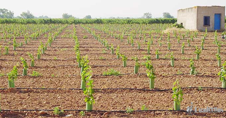 ASAJA CLM advierte de la indefesión del agricultor ante la denegación de agua para riego