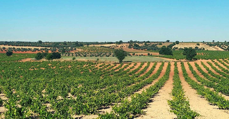 Bodegas Latúe inicia su campaña de vendimia con las primeras variedades ecológicas y con buenas expectativas