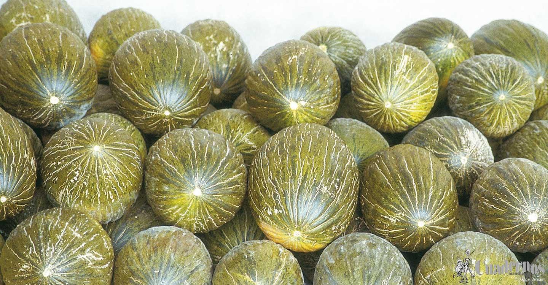 La campaña del melón y la sandía en La Mancha pasa su ecuador con bajos precios en la sandía