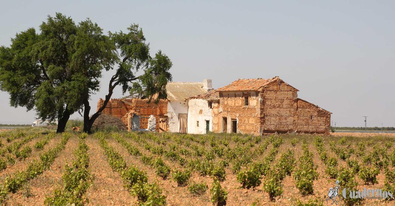 Castilla-La Mancha abona mañana otros cuatro millones de ayudas de la PAC para ganaderos y supera los 618 millones inyectados al sector