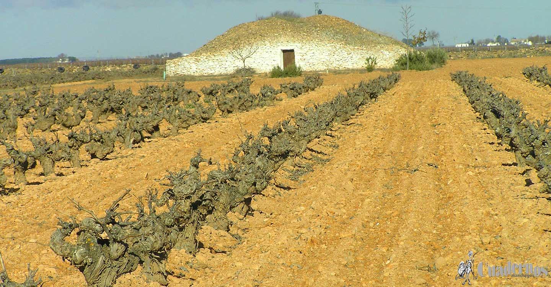 El Gobierno aprueba la norma que prorroga la validez de las autorizaciones para plantaciones de viñedo