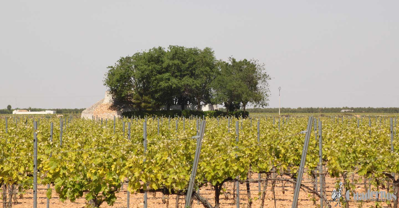 Castilla-La Mancha espera recibir alrededor de 100.000 solicitudes únicas de agricultores y ganaderos para la obtención de las ayudas de la PAC en 2021