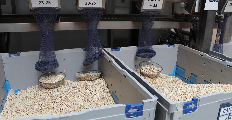 La SAT del Campo duplica su planta de procesado de pistacho de Castilla-La Mancha