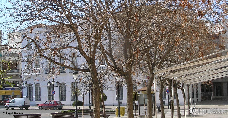 Árboles de Tomelloso
