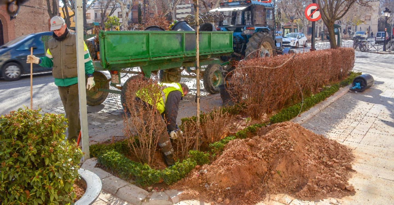 Medio Ambiente reforesta Don Víctor y el paseo de las Moreras de Tomelloso