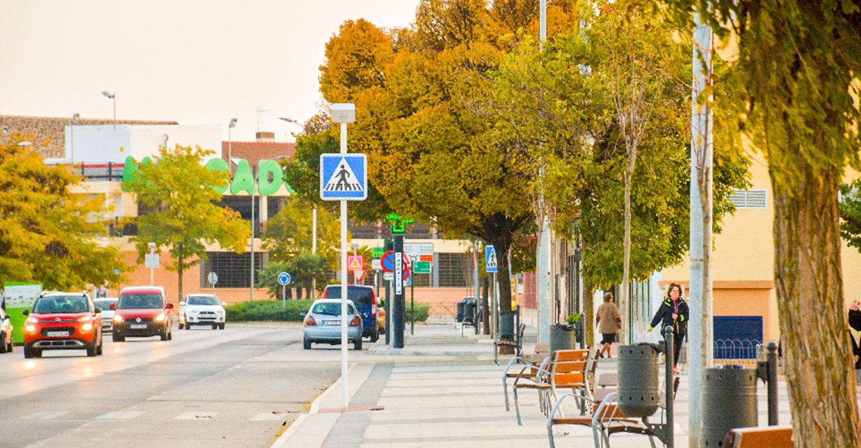 Intensa actividad de poda, repoblación y limpieza en las zonas verdes de Tomelloso