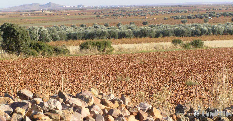 Conozca la estructura de la tierra de Tomelloso (5) :