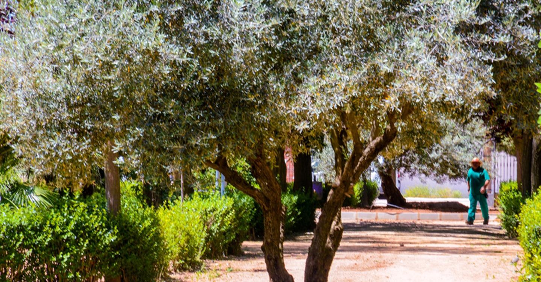 Continúa la instalación de vallados en zonas vegetales de Tomelloso