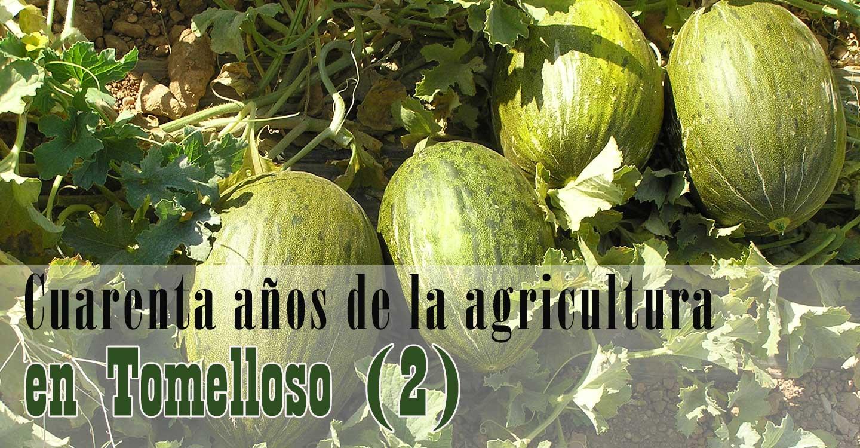 Cuarenta años de la agricultura en Tomelloso (2)