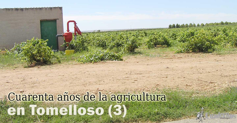 Cuarenta años de la agricultura en Tomelloso (3)