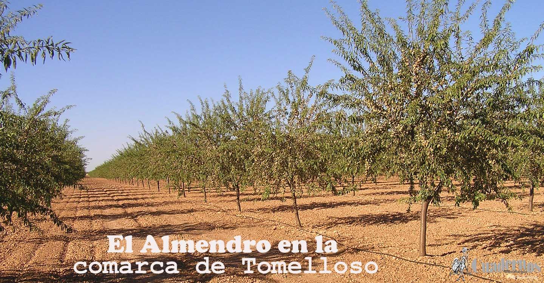El almendro en la comarca de Tomelloso