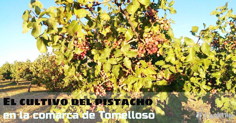 El cultivo del pistacho en la comarca de Tomelloso