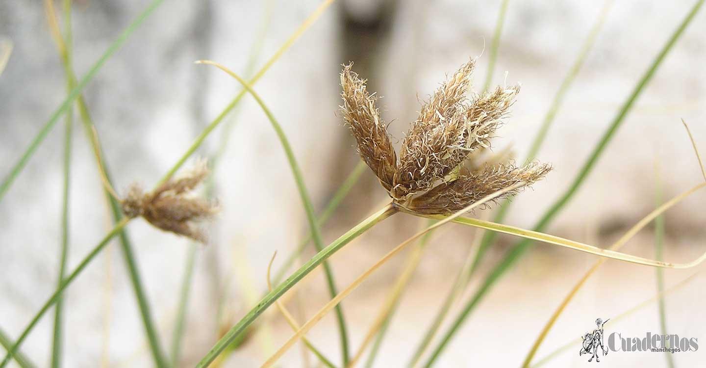Descubra la riqueza florística de Tomelloso (7)
