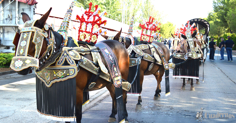 Gran desfile en Tomelloso de reatas, carros y mulas enjaezadas