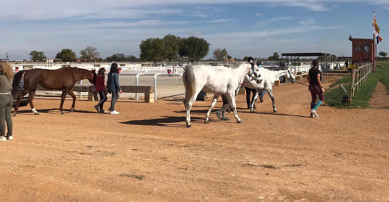"""El Campeón de España de Concurso Completo de Equitación será elegido este fin de semana en la Yeguada """"Los Arcángeles"""" de Tomelloso"""