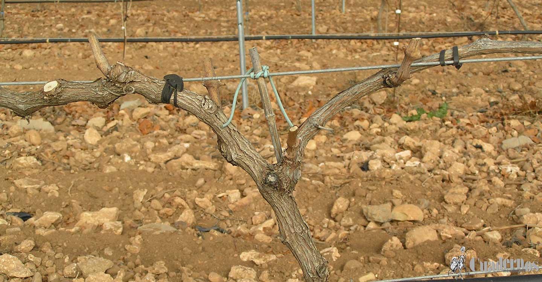 Envejecimiento de las viñas en formas apoyadas