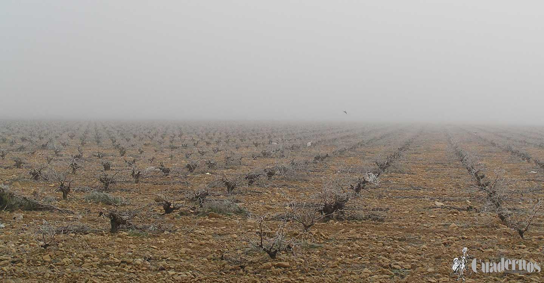 El escenario climático en Tomelloso (3)