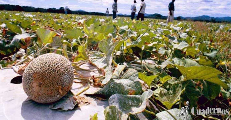 Incidentes en el melonar