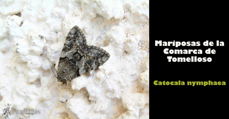 Mariposas de la Comarca de Tomelloso :
