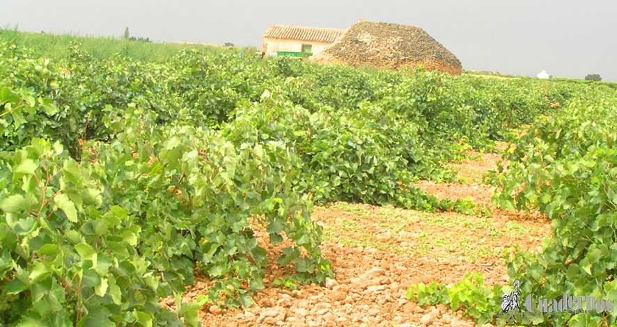 Nuestra agricultura y nuestros agricultores (I)