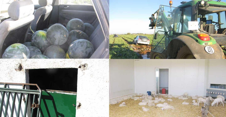 La Guardia Civil ha detenido a una persona en una operación desarrollada en las localidades de Tomelloso y Argamasilla de Alba contra robos en explotaciones agrícolas y ganaderas