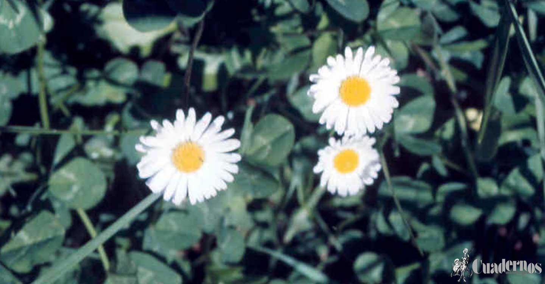 Plantas silvestres comestibles (4) :