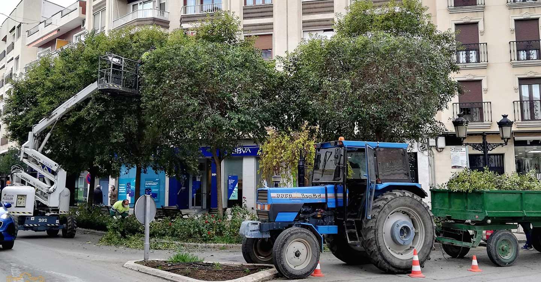 Comienzan trabajos de poda y embellecimiento de zonas verdes del centro de Tomelloso