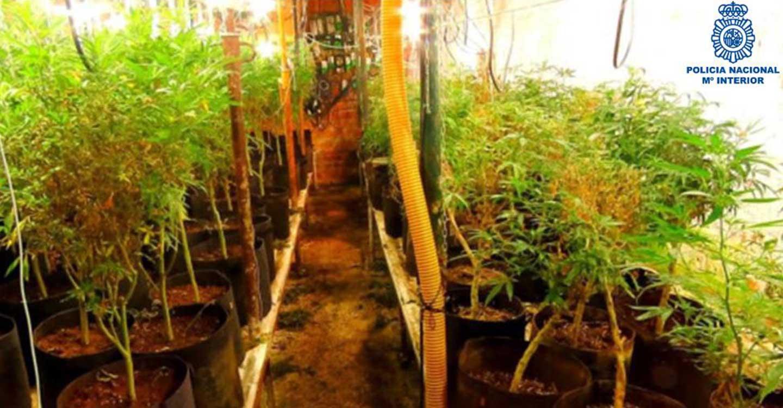 La Policía Nacional desmantela tres cultivos indoor de cannabis en la provincia de Ciudad Real