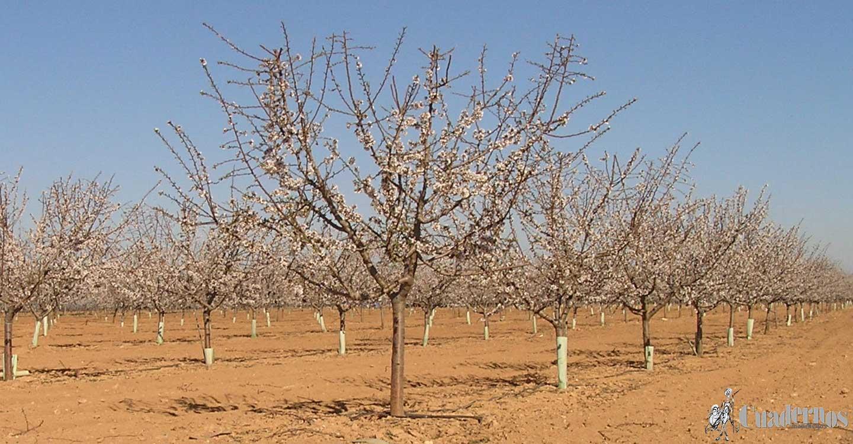 El silencio de la tierra y  el resurgir  de nuestros árboles