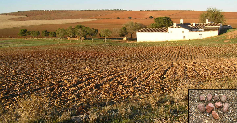 Conozca la estructura de la tierra de Tomelloso (3) :