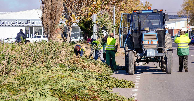 Continúan los trabajos de mantenimiento en distintas zonas verdes de Tomelloso