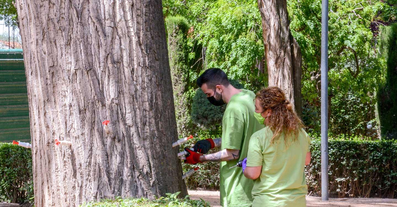 Nuevo tratamiento de endoterapia en las zonas verdes de Tomelloso