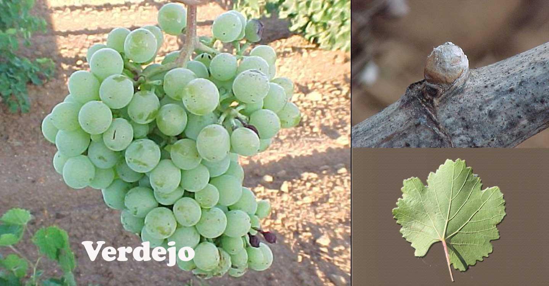 Variedades de uva :