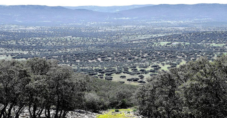El Gobierno regional publica hoy la aprobación del PRUG del Parque Natural 'Valle de Alcudia y Sierra Madrona', tras un proceso de participación y consenso de todos los interlocutores
