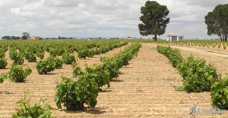 La AREV se relanza con la presidencia de Castilla-La Mancha para defender con más peso en Bruselas los intereses del sector vitivinícola
