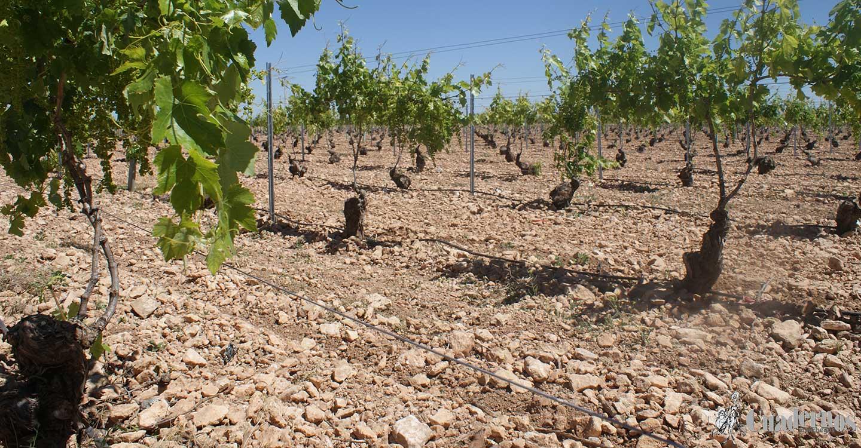 El Consejo de Ministros aprueba la distribución territorial de 7.679.764 euros para diferentes líneas de apoyo a los sectores agrícola y ganadero