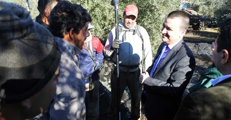 Castilla-La Mancha blinda con una nueva orden la campaña de la aceituna para garantizar la seguridad y evitar posibles brotes de COVID
