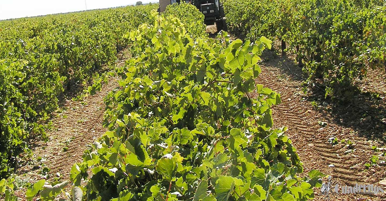 CCOO CLM exige más cultura preventiva en el sector agrario para poner freno a la siniestralidad laboral