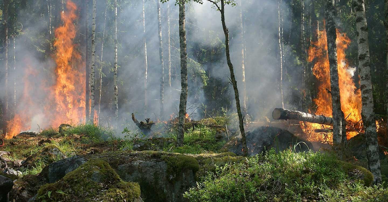 El Gobierno regional presenta la campaña de prevención y lucha contra incendios forestales de 2020 a la que destina más de 83,6 millones de euros