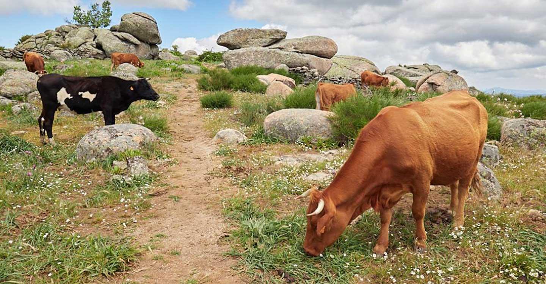 El ritmo de pagos a la agricultura ecológica no se ha visto frenado por la COVID, habiéndose abonado más de 30 millones de euros en el primer semestre