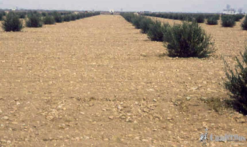 """Compromiso absoluto con el olivar de bajo rendimiento: """"Si no hay una ayuda específica en la PAC, Castilla-La Mancha la creará en el nuevo PDR"""""""